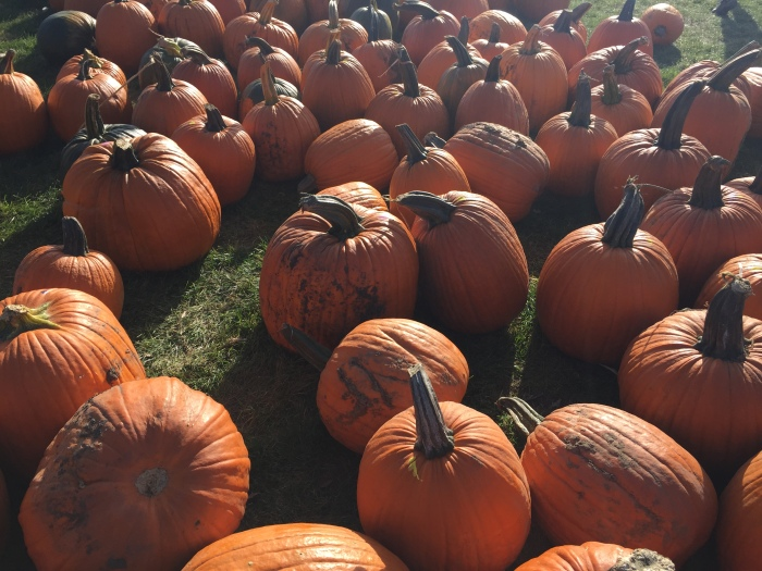 Pumpkins on PUMPKINS | Goebbert's Pumpkin Farm