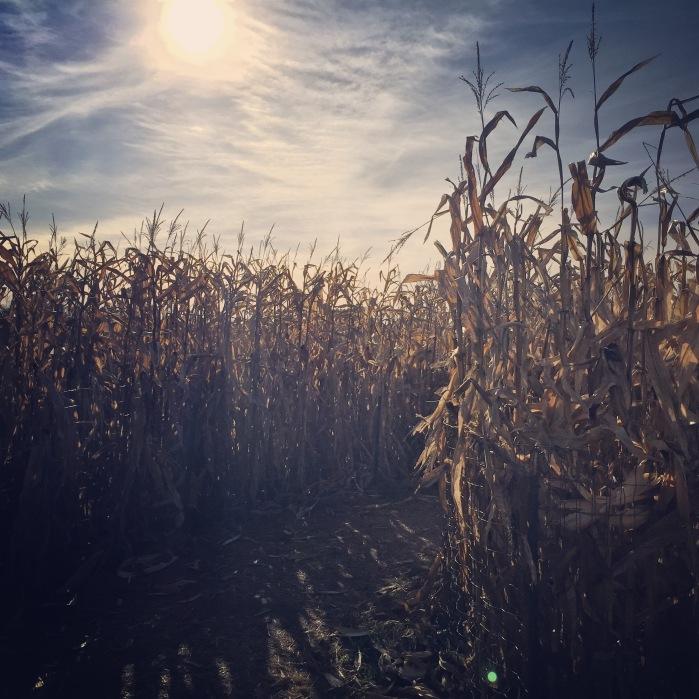 Corn Maze | Goebbert's Pumpkin Farm