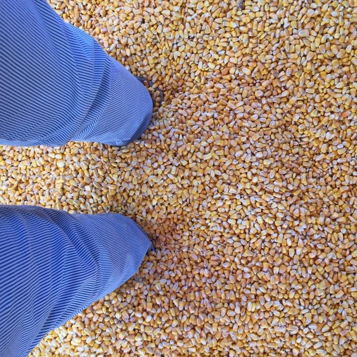 Corn Box