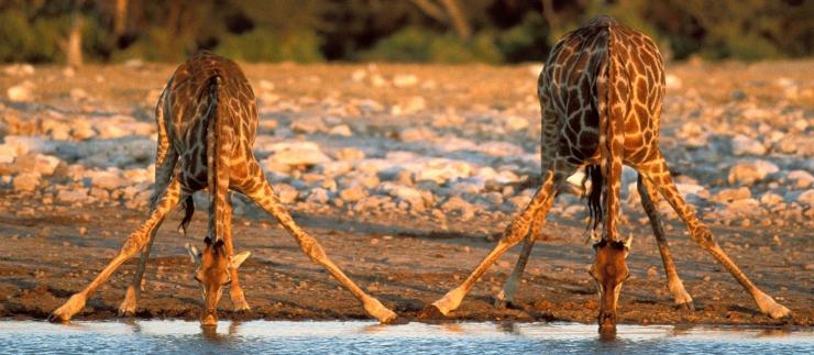 kruger national park; south africa